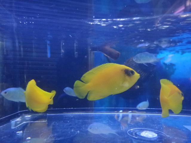 海水魚・サンゴ・水草・淡水魚_f0189122_139367.jpg