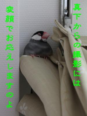 b0158061_23272161.jpg