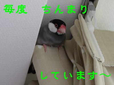 b0158061_23272635.jpg