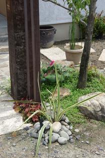 「戸田の家」の今。_d0095873_2147100.jpg