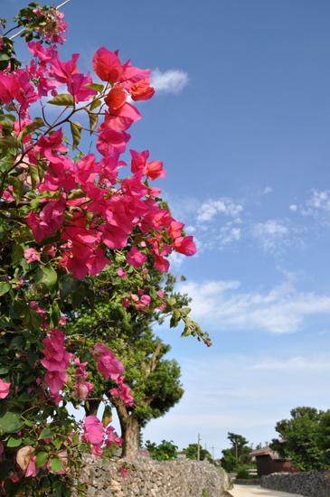 夏休み気分を味わえる写真_e0171573_144297.jpg