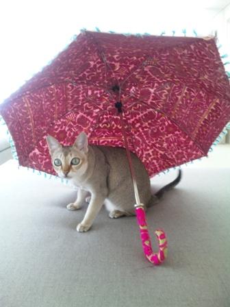 動物愛護についてのパブリックコメントお願いします!_a0138976_18135623.jpg