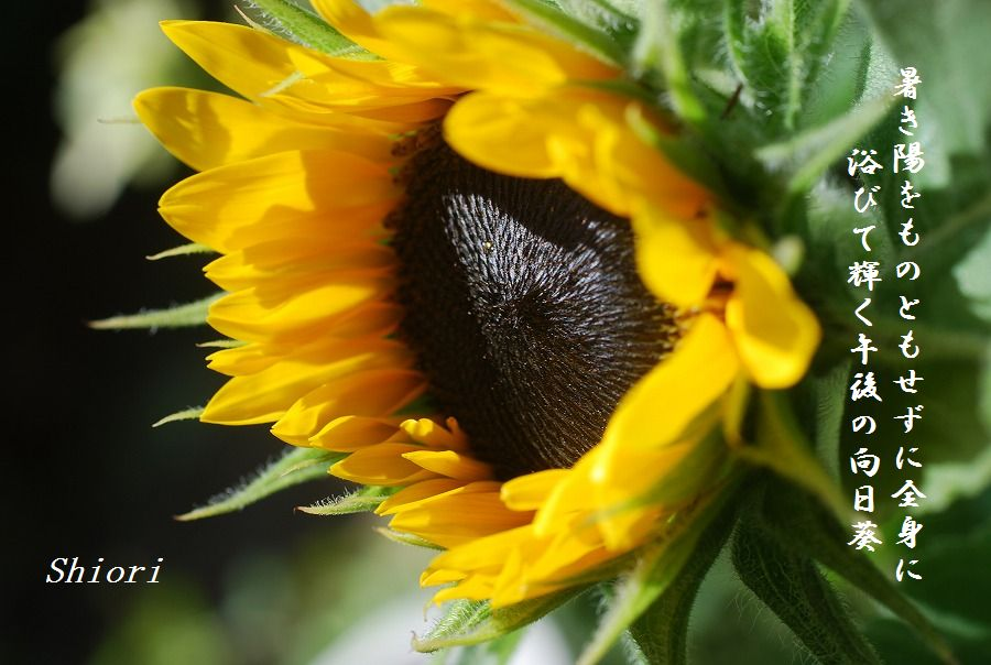 「夏を詠む」 夏の短歌2011 (2012)_c0187781_918253.jpg