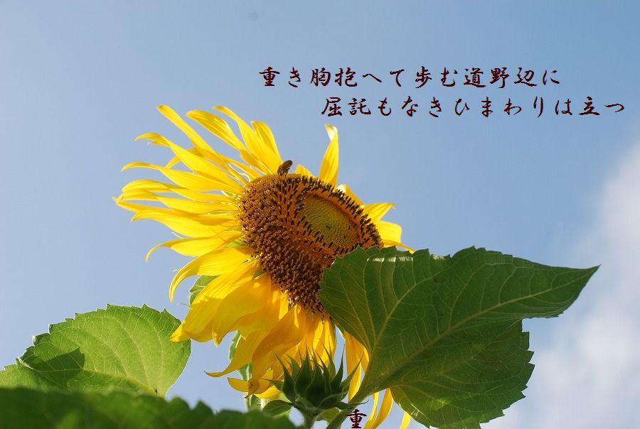 「夏を詠む」 夏の短歌2011 (2012)_c0187781_9184938.jpg