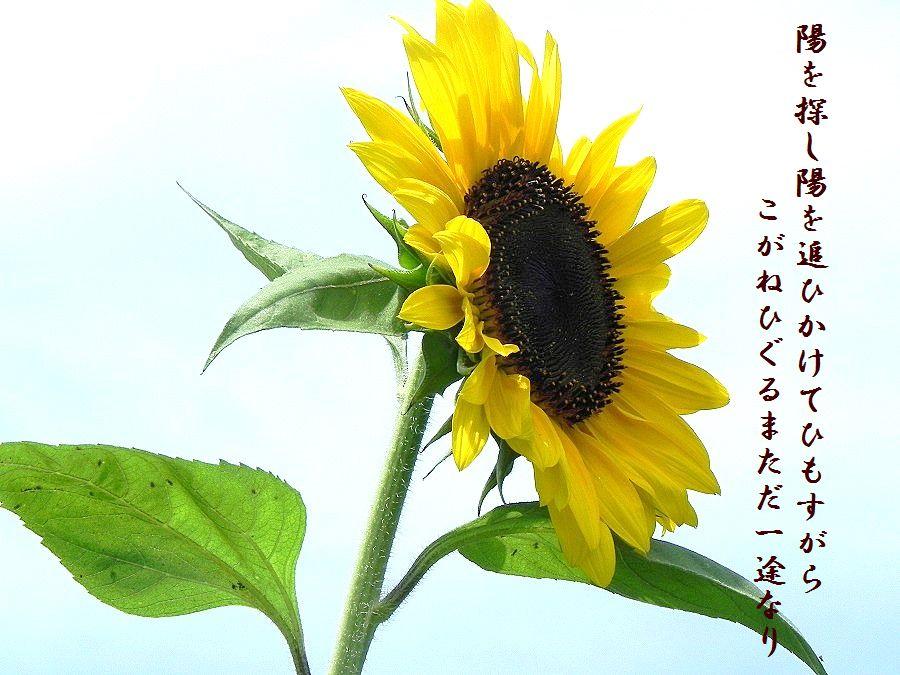 「夏を詠む」 夏の短歌2011 (2012)_c0187781_9191873.jpg