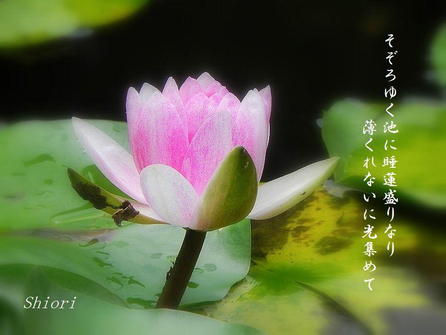 「夏を詠む」 夏の短歌2011 (2012)_c0187781_9242698.jpg