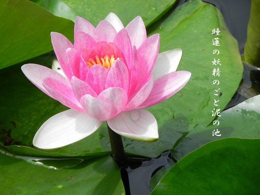 「夏を詠む」 夏の短歌2011 (2012)_c0187781_924973.jpg