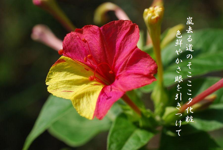 「夏を詠む」 夏の短歌2011 (2012)_c0187781_925912.jpg