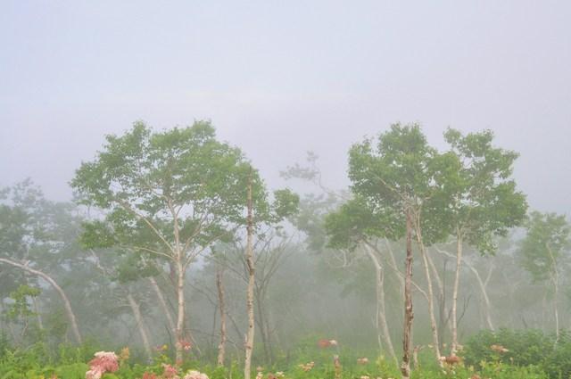 北海道キャンプ⑩ 屈斜路湖での恐怖の思い出_a0126590_17335556.jpg