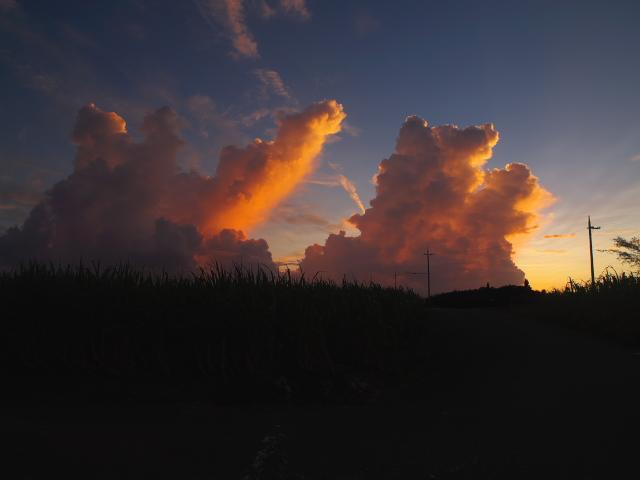宮古島の風景 朝の散歩_f0024992_7142839.jpg