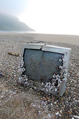 TVの漂着続いています。_c0019338_196394.jpg