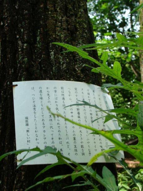 文学プロムナード⑪~続・軽井沢日記~_d0246243_1452445.jpg