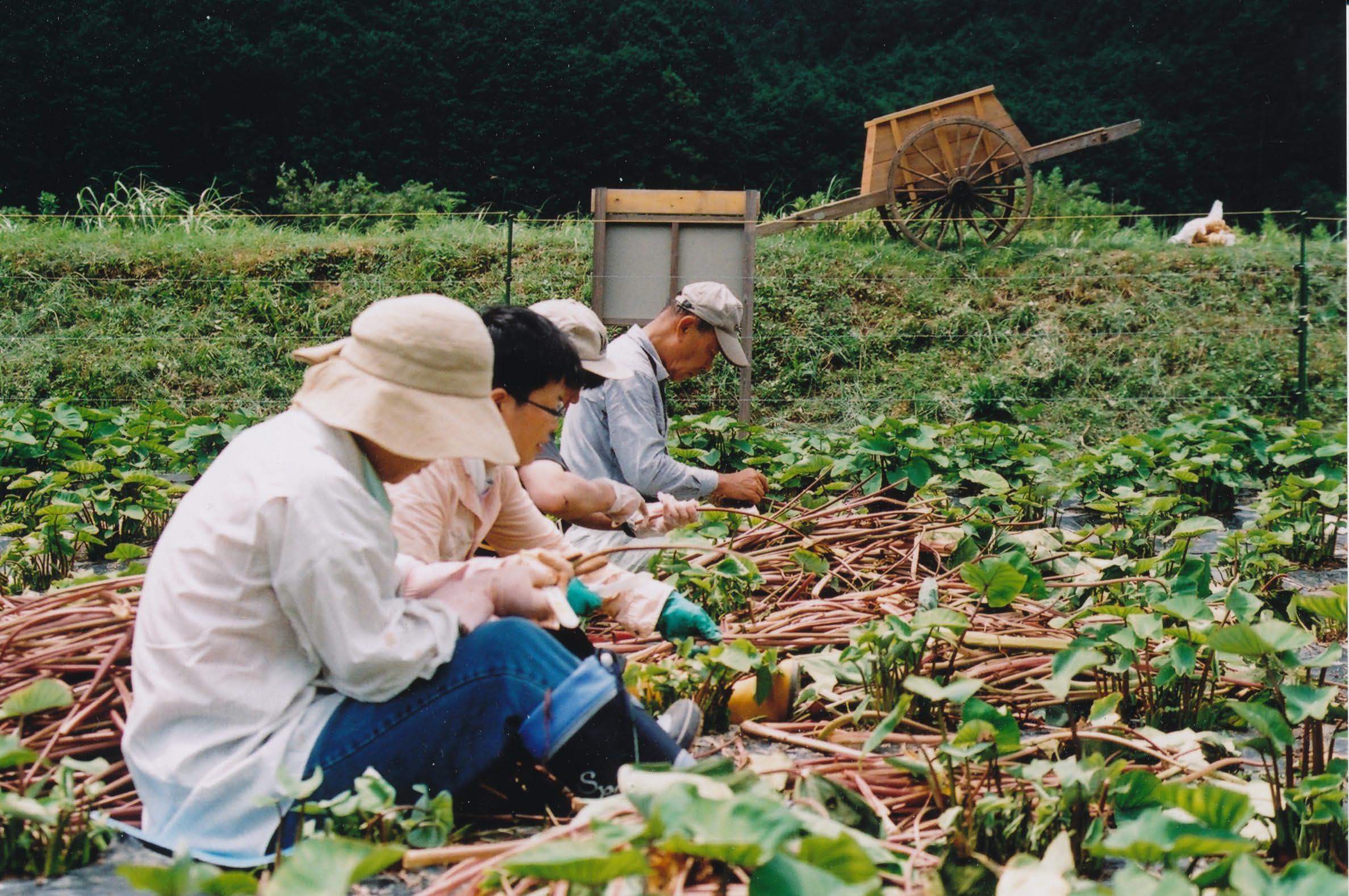 ごんべえ畑の収穫祭☆その4_e0156251_22524453.jpg