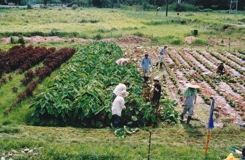 ごんべえ畑の収穫祭☆その4_e0156251_22553492.jpg