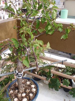 植木の手入れ_c0180460_1610122.jpg