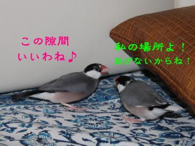 b0158061_21525355.jpg