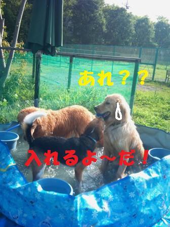 f0230380_16445591.jpg