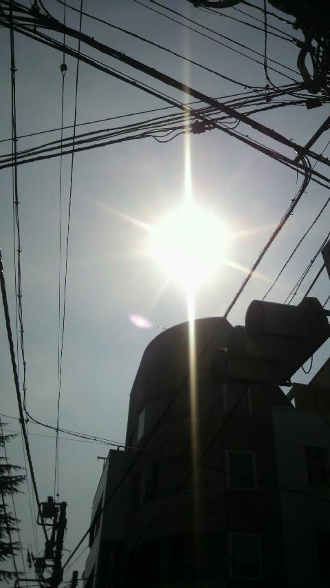 強烈な暑さ_a0075684_212281.jpg