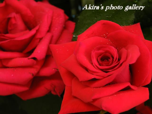 a0042211_1618437.jpg
