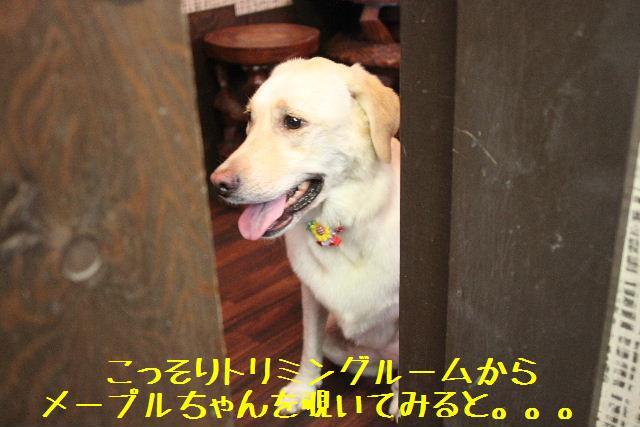 b0130018_9101878.jpg