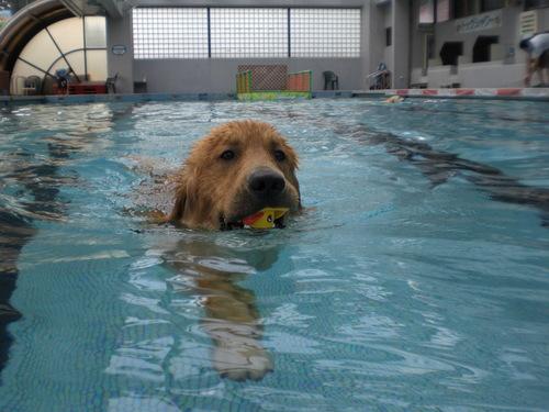 水泳デビューのまーくん_c0220025_1411812.jpg