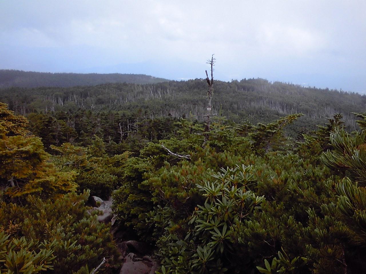 入山二日目:中山山頂下からみたにゅうへ続く稜線_e0155231_9161410.jpg