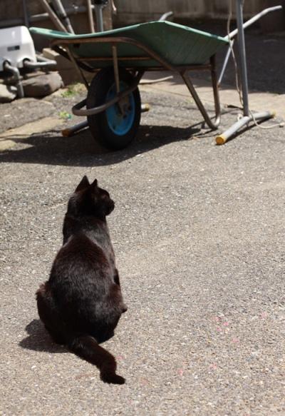 黒猫の背中…_c0165046_17232893.jpg