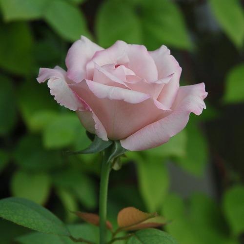 d0105052_8265015.jpg