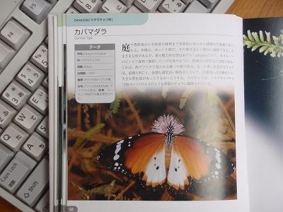 カバマダラと沖縄そば_c0180460_051752.jpg