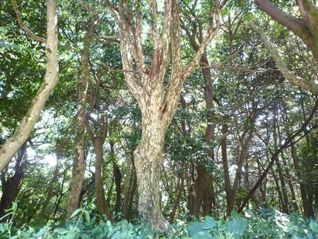 位登八幡神社・神功皇后は田原麿の城に半年も滞在した_c0222861_17292087.jpg