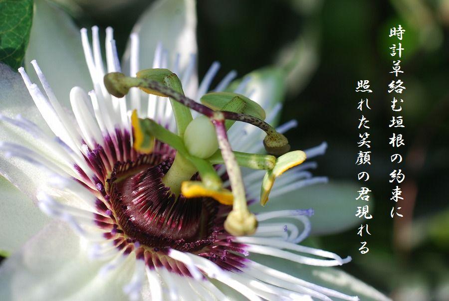 「夏を詠む」 夏の短歌2011 (2012)_c0187781_0202673.jpg