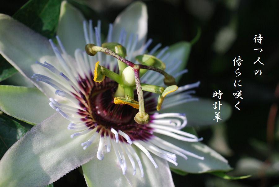 「夏を詠む」 夏の短歌2011 (2012)_c0187781_0204622.jpg
