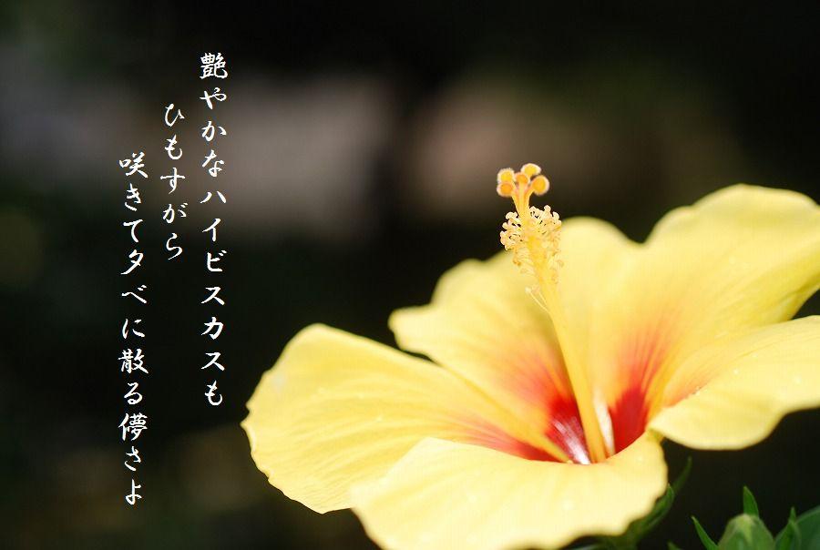 「夏を詠む」 夏の短歌2011 (2012)_c0187781_0224117.jpg