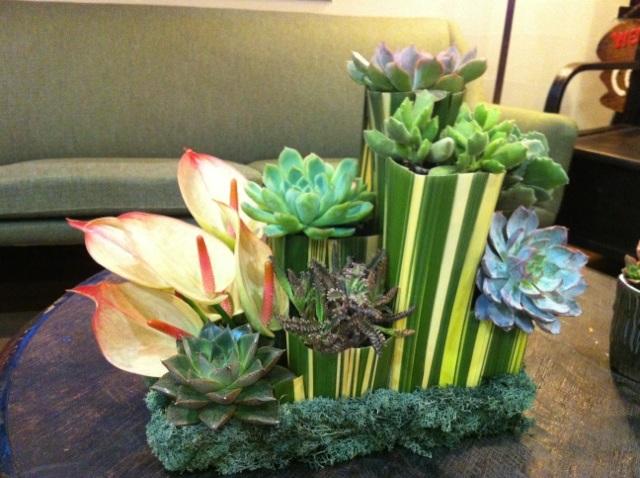 Succulent plant_e0013089_2357161.jpg