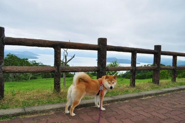 北海道キャンプ⑪ オーチャードグラス_a0126590_124331100.jpg