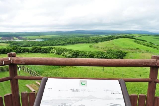北海道キャンプ⑪ オーチャードグラス_a0126590_13171521.jpg