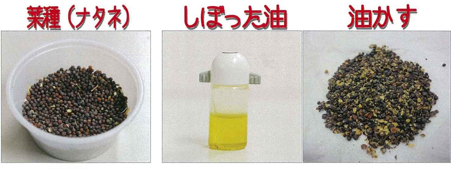 採れたてのナタネ油は黄金色!_e0235911_14371552.jpg