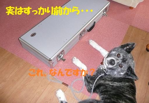 f0121712_16141527.jpg