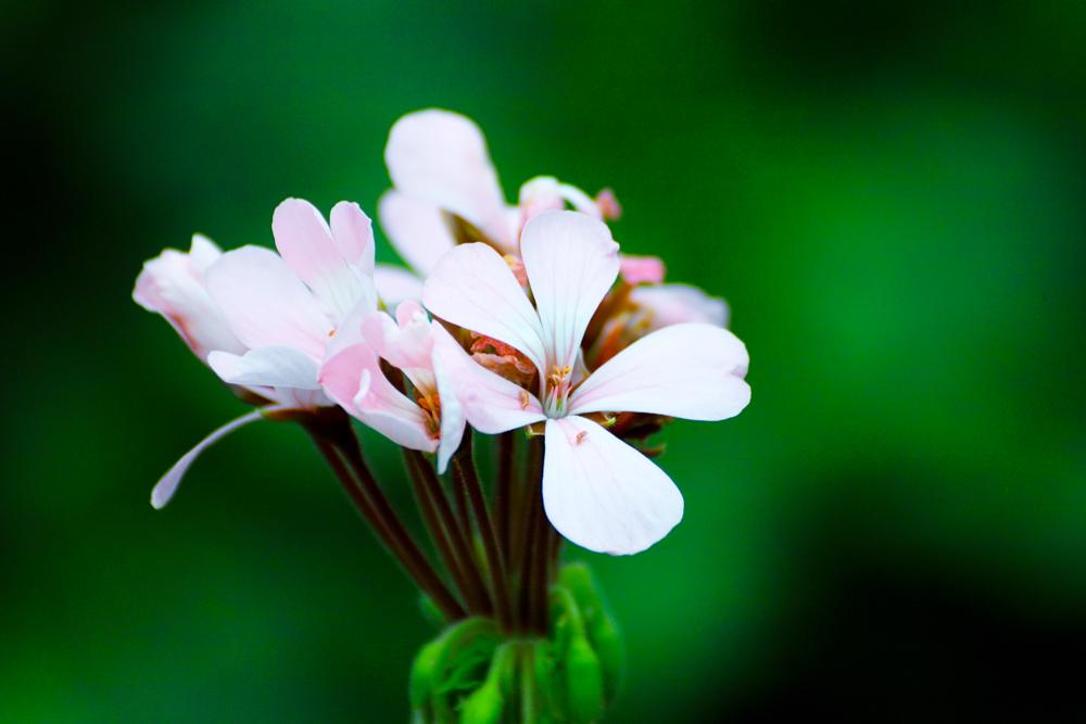 夏のお花めぐり ~オニユリの頃~_c0223825_123425100.jpg