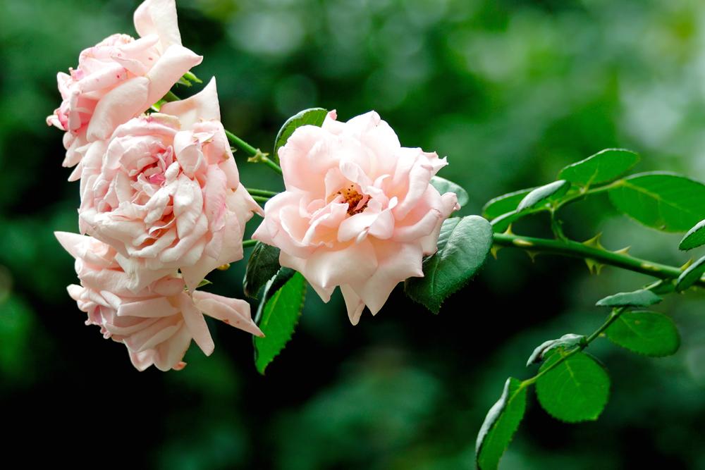 夏のお花めぐり ~オニユリの頃~_c0223825_126252.jpg