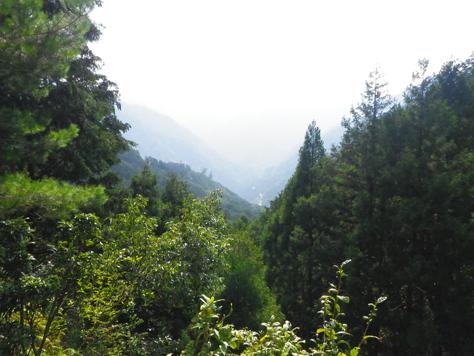 林道を走り、尾鷲市街を山から見下ろしてみる_c0010936_15165661.jpg