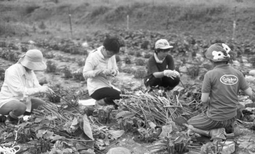 ごんべえ畑の収穫祭☆その6_e0156251_23402737.jpg