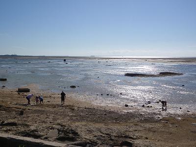 カーミージーの干潟散策_c0180460_9383974.jpg