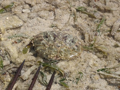 カーミージーの干潟散策_c0180460_9415320.jpg