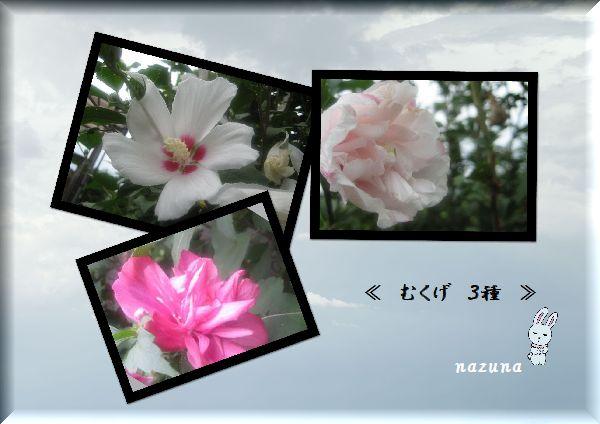b0126308_10551610.jpg