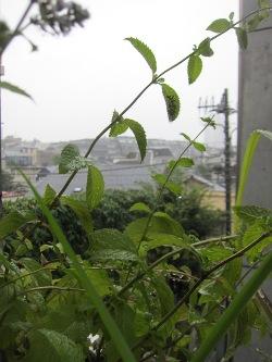 雨・・・恵みの雨とも言います。_d0091909_742619.jpg