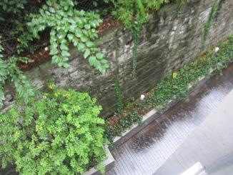 雨・・・恵みの雨とも言います。_d0091909_762558.jpg