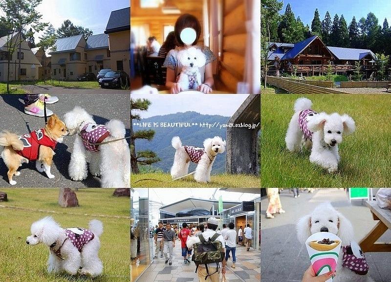 夏休み旅行2011④_d0083623_2121536.jpg