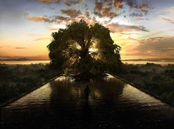 生命の樹_e0103024_0415737.jpg