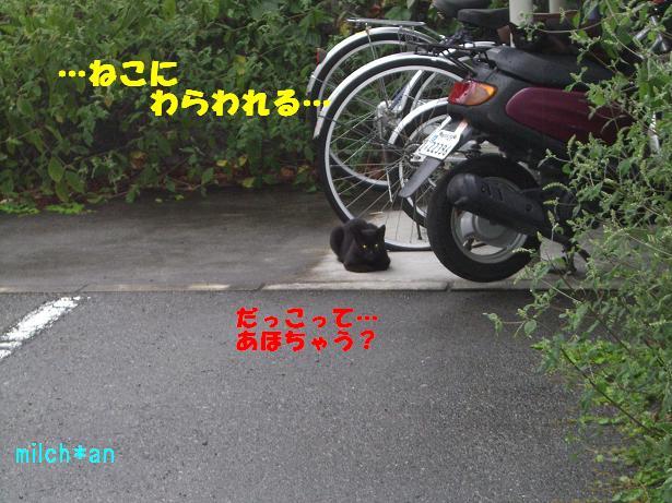 b0115642_2275172.jpg